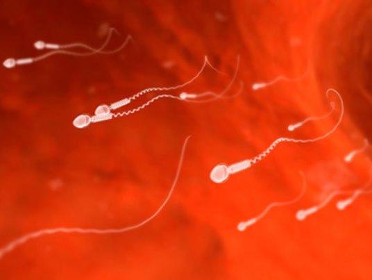 Трентал подвижность сперматозоидов
