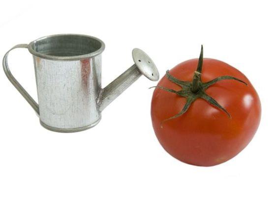 Как поливать помидоры дрожжами?