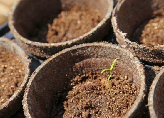 Оптимальная почва для клубники: какой она должна быть 99