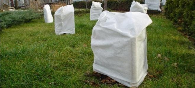 При какой температуре утеплять саженцы на зиму
