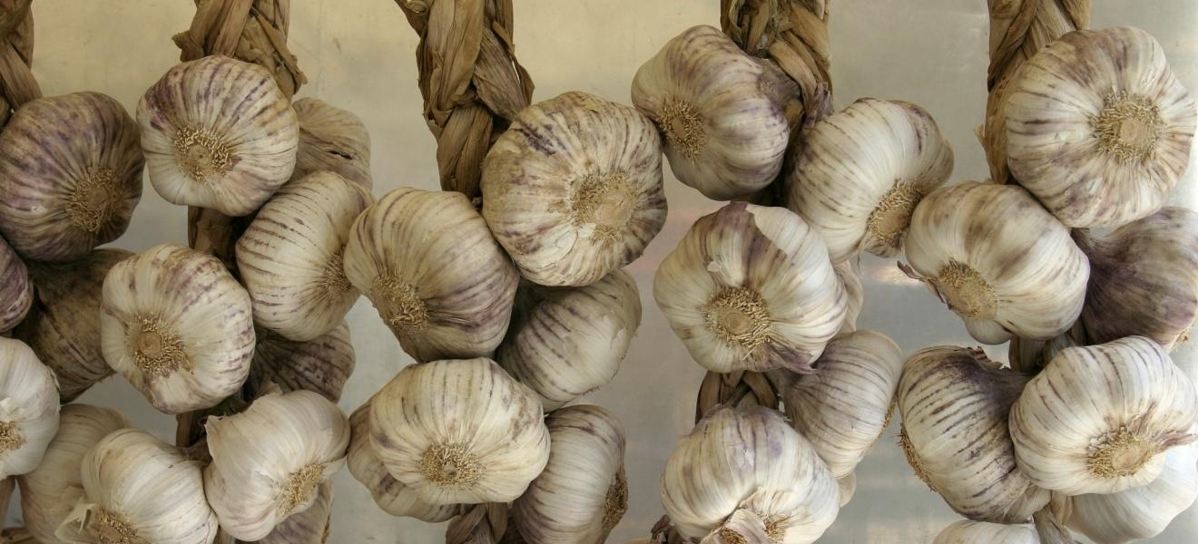 Заготовки из чеснока на зиму, как хранить чеснок зимой
