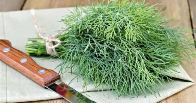 Способы, как засолить укроп на зиму в банках: рецепты засолки зелени, как хранить соленый продукт