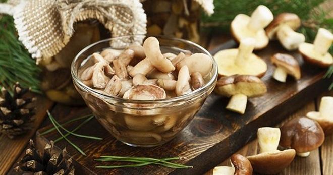 Маслята на зиму - способы очистки грибов, сушка, заморозка и рецепты маринования