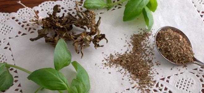 Базилик сушеный: применение, полезные свойства и как сушить в домашних условиях