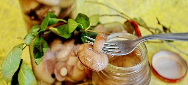 Маринованные маслята на зиму: пошаговый и простой рецепт самых вкусных маслят.