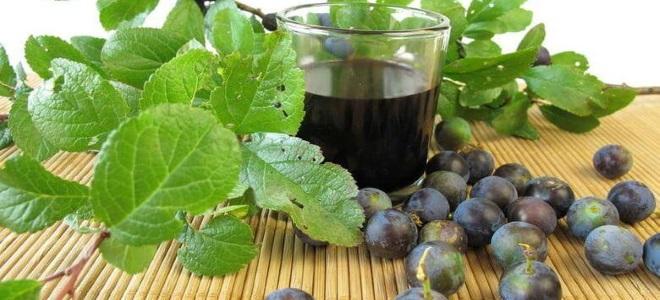 вино из терна в домашних