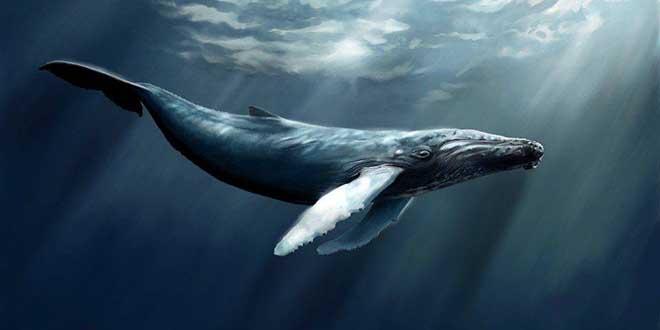 Заповедник китов