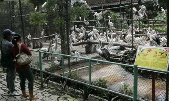 Зоопарк Surabaya's Zoo