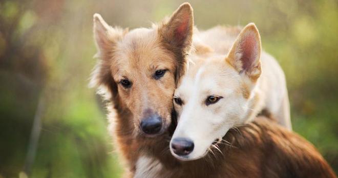 Собака случка с женщиной
