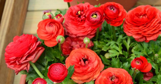 Цветочки похожие на розочки