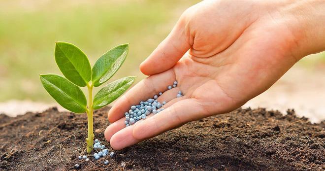 Минеральные удобрения – что это такое, плюсы и минусы, типы и виды минеральных добавок