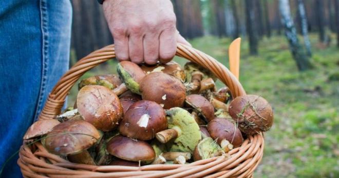 К чему снятся белые грибы, во сне их собирать и резать