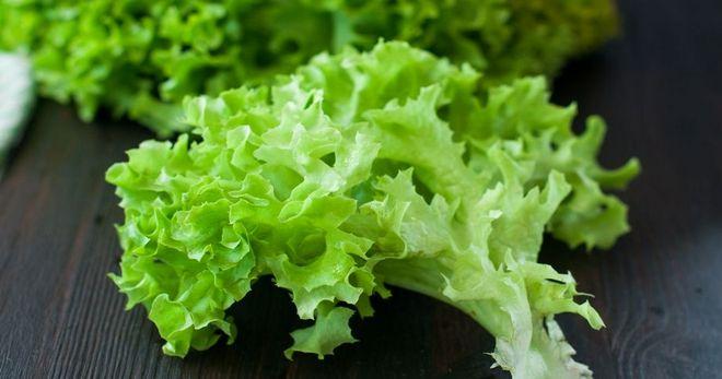 Салат латук: сорта, фото, посадка и уход