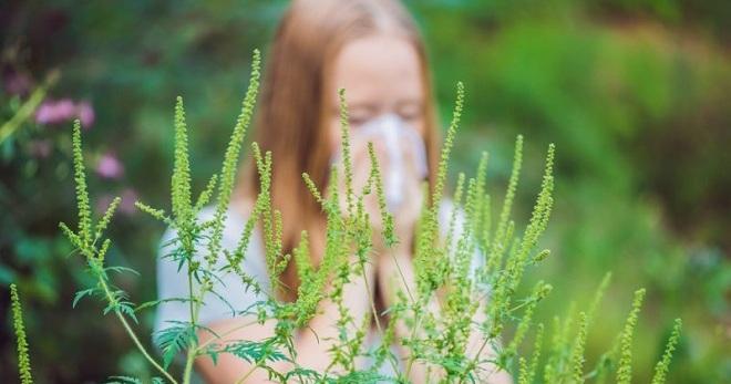 Аллергия в конце июля – начале августа