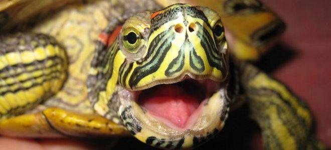 Прокатиться верхом на черепахе во сне — негативный знак.