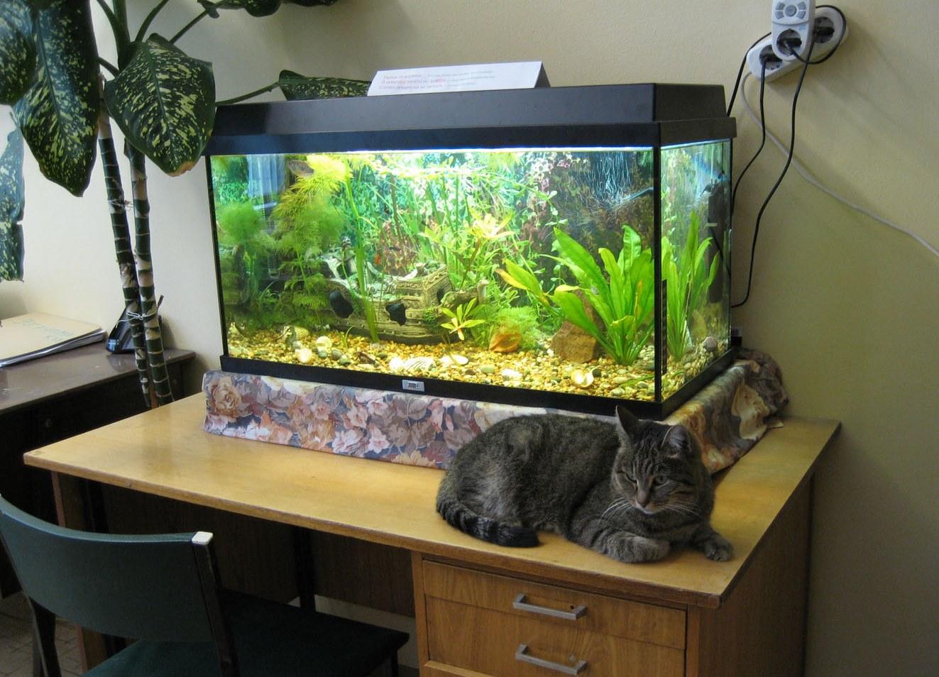Чем сделать аквариум своими руками фото 390