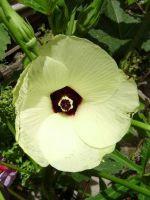 Выращивание люффы из семян в домашних условиях 438