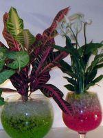 Гидрогель для растений