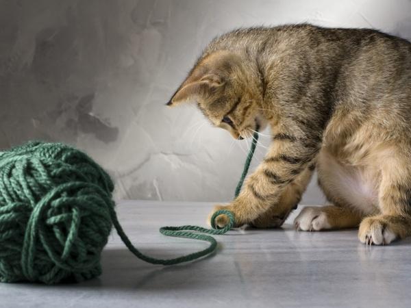 Игрушки для котят своим руками фото 239