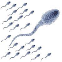 Еда количества спермы