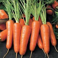 калорийность сырой моркови