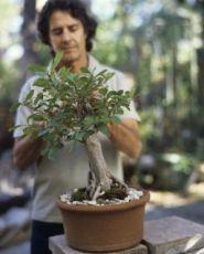 Бонсай растение уход