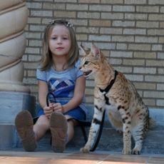 Самая большая домашняя кошка фото
