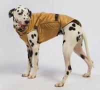 Одежда для больших собак4