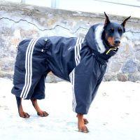 Одежда для больших собак9