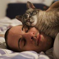 Почему кошка спит над головой