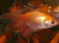Содержание аквариумных рыбок