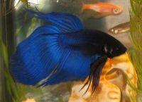 Содержание рыб в аквариуме