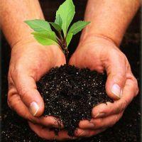 Виды и применение калийно-фосфорных удобрений