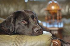 кормление собаки после энтерита