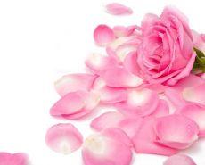лепестки роз применение