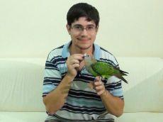 приручение попугая к рукам