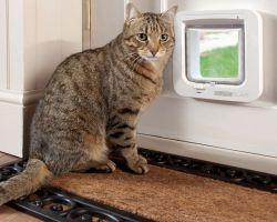 Дверца для кошек своими руками фото 800