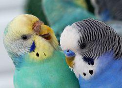 Сколько лет живут различные птицы в том числе вороны и попугаи 33
