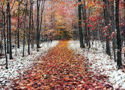 к чему снится снег осенью