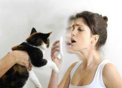 Через сколько дней может проявиться аллергия на кошку thumbnail