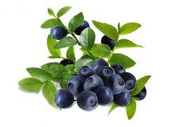 листья черники полезные свойства и противопоказания