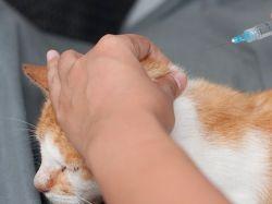 диабет у кошек симптомы 1