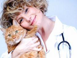 Кошачий грипп симптомы и лечение