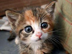 Гноятся глазки у котенка чем лечить в домашних условиях 32