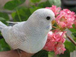 У попугая выпадают перья2