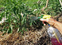 борьба с огородной совкой