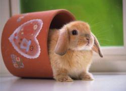 Кормление кроликов в домашних условиях: что должно входить в 87