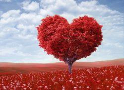 Теория любви