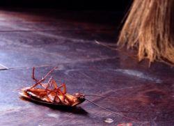 Как избавиться от тараканов дома