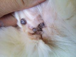 клещи у котов фото